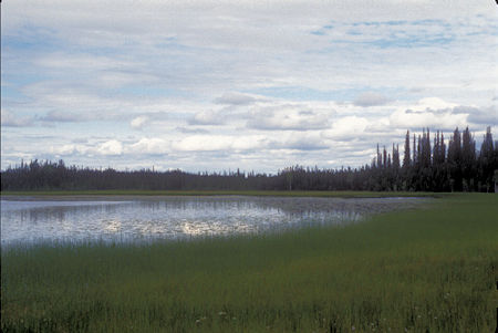 Deadman Lake, Black Spruce Forest, Tetlin National Wildlife Refuge, Alaska